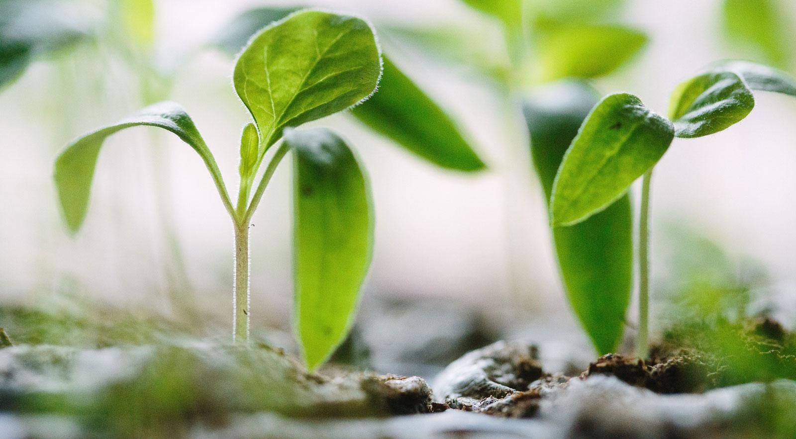 Invirtiendo en Soluciones Ecológicas